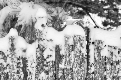 SNOW ON COYOTE FENCE