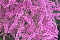 Eschel Blossoms