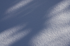 Shadows on Snow