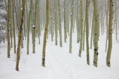 Ice crystals were suspended in the air in a type of thin fog. The aspens appeared to go on forever.